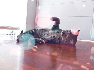 10 curiosidades que não sabia sobre gatos