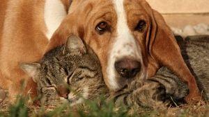 Cálculos urinários em cães e gatos