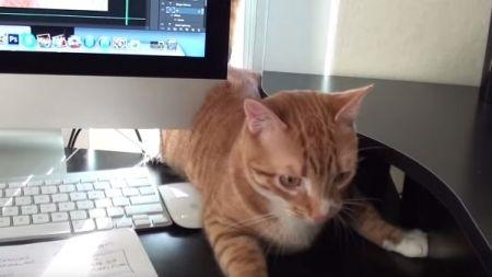 Como sobreviver a um dia de trabalho com o teu gato