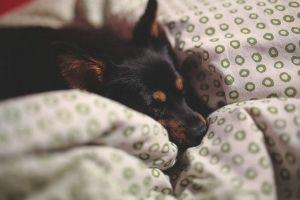Que devo fazer se o meu animal de estimação tem vómitos ou diarreia?