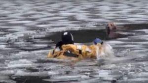 Um homem salva um cão das aguas geladas