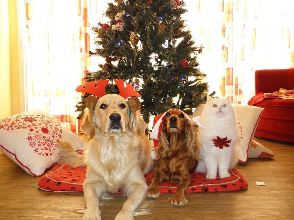 8 Razões para desfrutar do Natal com o teu animal