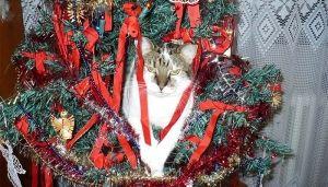 Como vês tu o Natal e como o vê o teu gato