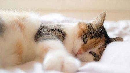 Comemora o Dia Internacional do Gato!