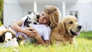 Brinquedos para animais de estimação divertidas
