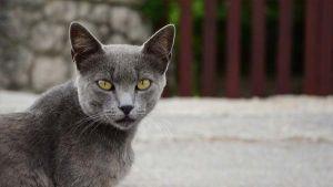 O controlo de saúde do gato adulto