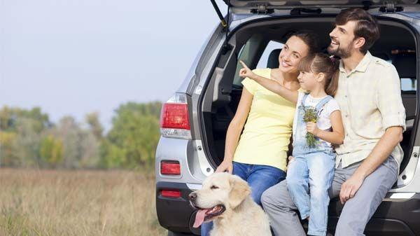 Viajar com o meu cão pela estrada