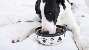 Comida caseira para cães ou ração?