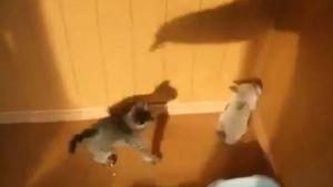 Gatinhos brincam com a sombra do humano