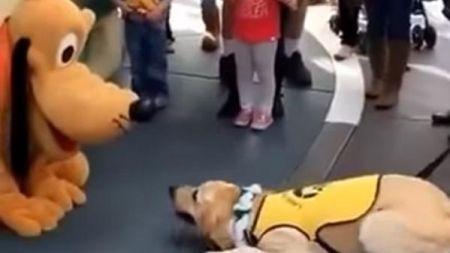 Um cão guia emociona-se ao conhecer o Pluto
