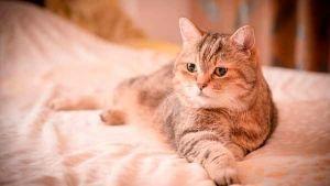 Alergia em gatos: aprende a detetar e combate-las