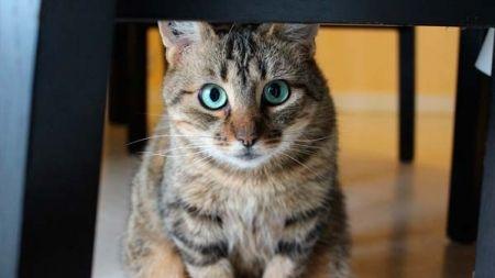Os gatos e os seus donos: como muda a relação se o gato é macho ou fêmea