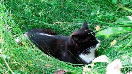 Plantas para gatos: 10 plantas que o teu felino vai adorar