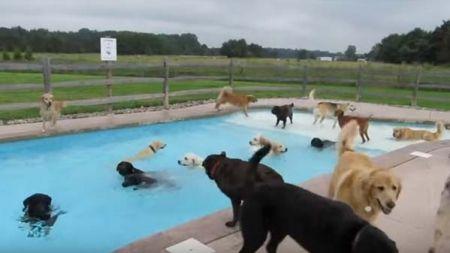 Cães que desfrutam do seu banho