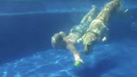 Cão mergulhador