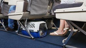 Viajar com cães de avião