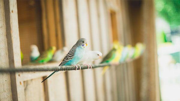 Criação de aves: suplementos vitamínicos