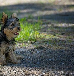 Parasitas externos em cães no inverno