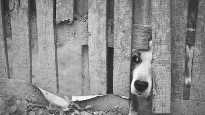 O que fazer quando encontramos animais abandonados?