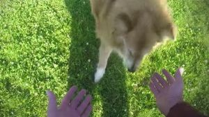 Troques de magia para cães