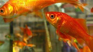 Alguns erros que deves evitar no teu aquário