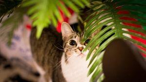 Sabes a quantos anos humanos equivalem os anos felinos?