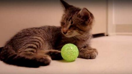 Um pequeno gatinho dá-nos uma grande lição