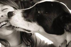 5 Motivos pelo quais o teu cão te lambe