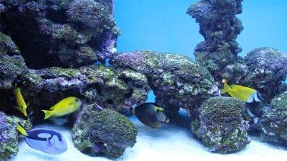 O meu primeiro aquário: a localização do aquário na nossa casa