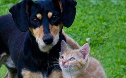 O que causa stress em cães e gatos