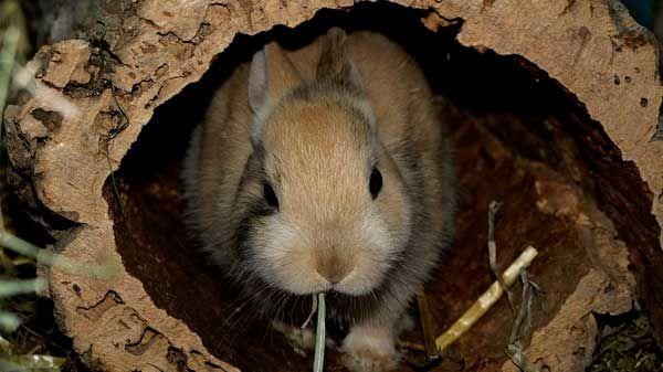Plantas tóxicas para coelhos