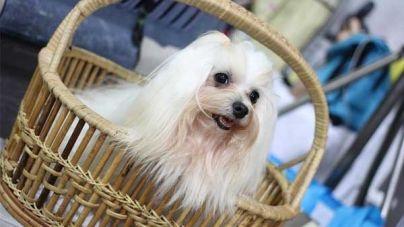 Tipos de pelo em cães