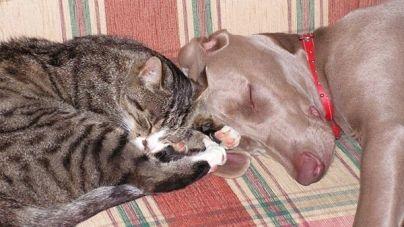 Vantagens de adotar animais adultos