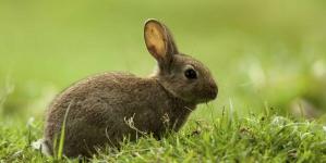 Doenças dos coelhos