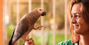 O que comem os papagaios?