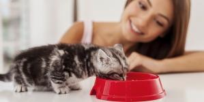 Como introduzir um gato novo em casa