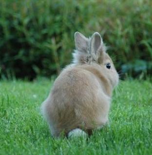O que comem os coelhos?