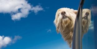 Férias: viajar com cão de carro