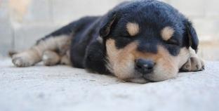 Como cuidar de um cachorro recém-nascido