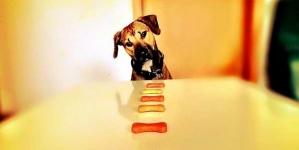 Como escolher a ração para o meu cão