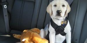 O teu cão e o carro: Segurança e conselhos – Parte I