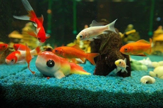 A superpopulação num aquário