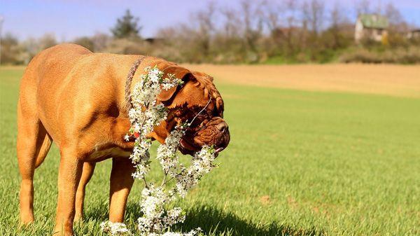 Leishmaniose em cães: existe risco de contágio?