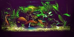 Porque o meu aquário está turvo?