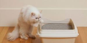 O que devo saber sobre os excrementos do meu gato?
