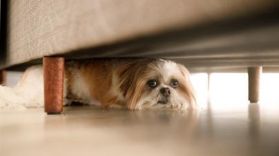 Cães com medo às tempestades