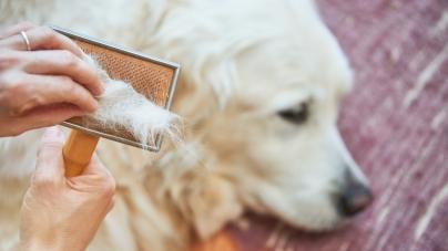 Como escovar um cão segundo o seu tipo de pelo