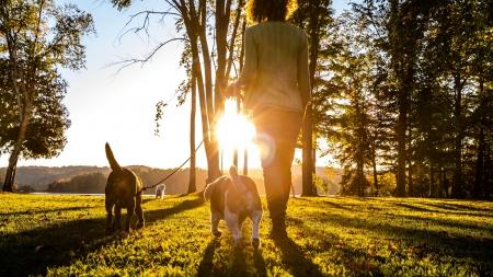 Perguntas frequentes sobre as raças de cães