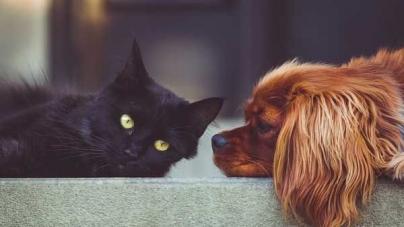 Parasitas em cães e gatos