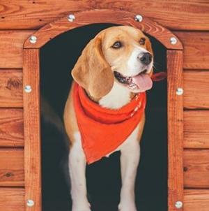 Manutenção da casota para cães